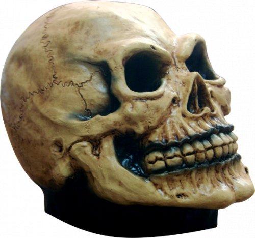 Complemento Cranium