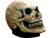 comprar Complemento Cranium